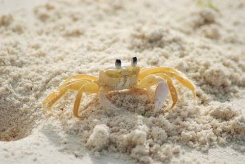 蟹の名は。#2